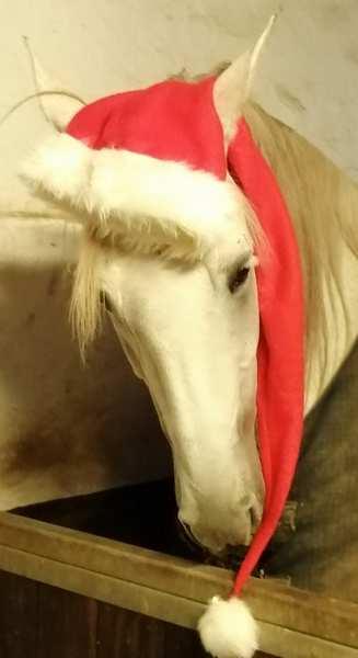 Behandling af heste